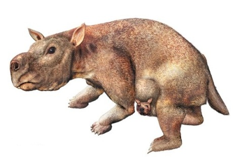Mega-wombat' unearthed in Australia